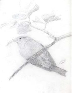 Drawing I made of a bird (year 2000)